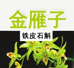 金雁子-温州铁皮石斛产品起名案例